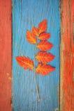 Hoja del otoño en la tabla de madera Fotos de archivo