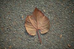 Hoja del otoño en la tierra Fotos de archivo