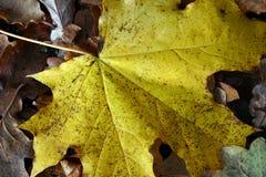 Hoja del otoño en la tierra Imagen de archivo libre de regalías
