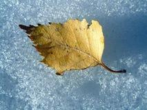 Hoja del otoño en nieve Imagen de archivo libre de regalías