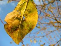 Hoja del otoño en un árbol Fotografía de archivo