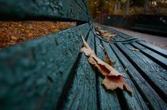 Hoja del otoño en un banco Fotos de archivo