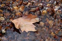 Hoja del otoño en una corriente pura. Fotos de archivo libres de regalías
