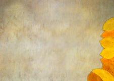 Hoja del otoño que cae abajo Imagen de archivo libre de regalías