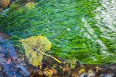 Hoja del otoño subacuática en una corriente clara Imagen de archivo libre de regalías