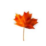 Hoja del otoño - vector fotografía de archivo
