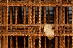 Hoja del otoño y alambres aherrumbrados del hierro Fotos de archivo