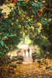 Hoja del otoño y fondo defocused Imagen de archivo libre de regalías