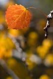 Hoja del otoño Imagen de archivo
