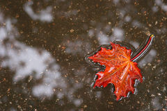 Hoja del otoño en agua Imágenes de archivo libres de regalías