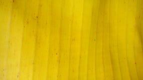 hoja del plátano Fotos de archivo