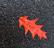 Hoja del roble en el fondo del asfalto Imagenes de archivo