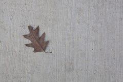Hoja del roble en Gray Concrete Background Fotografía de archivo libre de regalías