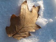 Hoja del roble en la nieve Imagenes de archivo