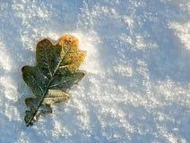 Hoja del roble en nieve Imagen de archivo libre de regalías