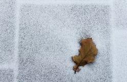 Hoja del roble en una nieve Foto de archivo libre de regalías