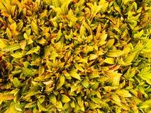 Hoja del rojo del verde amarillo Fotografía de archivo libre de regalías