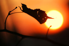 Hoja del sol del ocaso del otoño Foto de archivo libre de regalías