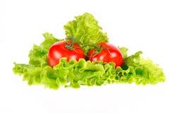 Hoja del tomate y de la ensalada Fotos de archivo libres de regalías