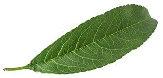 Hoja del verde de la fruta del melocotón fotos de archivo