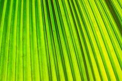 Hoja del verde de la palma del primer para el fondo Fotos de archivo