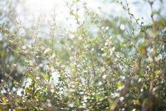 Hoja del verde del bokeh de la falta de definición con el fondo de la llamarada del sol Imágenes de archivo libres de regalías