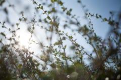 Hoja del verde del bokeh de la falta de definición con el fondo de la llamarada del sol Fotos de archivo libres de regalías