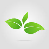 Hoja del verde del icono de Eco Imagenes de archivo