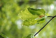 Hoja después de la lluvia Foto de archivo libre de regalías