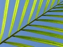 Hoja diagonal Fotografía de archivo