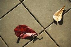 Hoja dos en la calle Fotografía de archivo