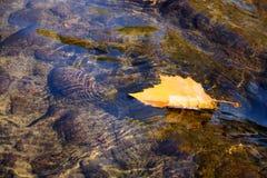 Hoja en agua Imagen de archivo libre de regalías