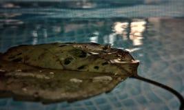 Hoja en el agua fotografía de archivo libre de regalías