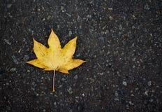 Hoja en el asfalto Imagen de archivo libre de regalías