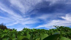 Hoja en el cielo azul Fotografía de archivo libre de regalías