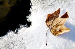 Hoja en el hielo Foto de archivo