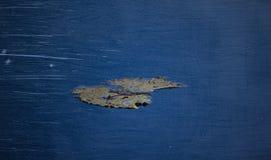 Hoja en fondo azul con el rasguño de la película Foto de archivo libre de regalías