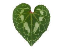 Hoja en forma de corazón Imágenes de archivo libres de regalías