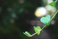 Hoja en forma de corazón Foto de archivo
