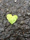 Hoja en forma de corazón Fotos de archivo libres de regalías