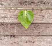 Hoja en forma de coraz?n en la madera fotografía de archivo libre de regalías
