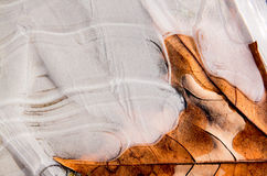 Hoja en hielo Imagen de archivo libre de regalías