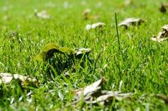 Hoja en la hierba Foto de archivo