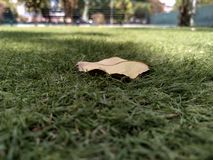 Hoja en la hierba en días de verano imagen imagen de archivo