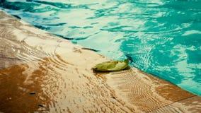 Hoja en la piscina con ventoso almacen de metraje de vídeo