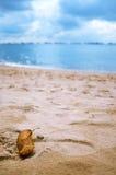 Hoja en la playa fotografía de archivo