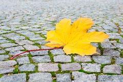 hoja en la puesta del sol, hojas de la caída del arce de otoño coloridas Foto de archivo