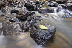 Hoja en la roca imagenes de archivo