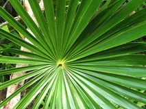 Hoja en las zonas tropicales Imagen de archivo libre de regalías