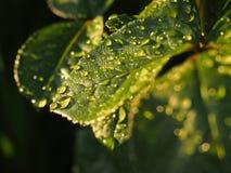 Hoja en lluvia Foto de archivo